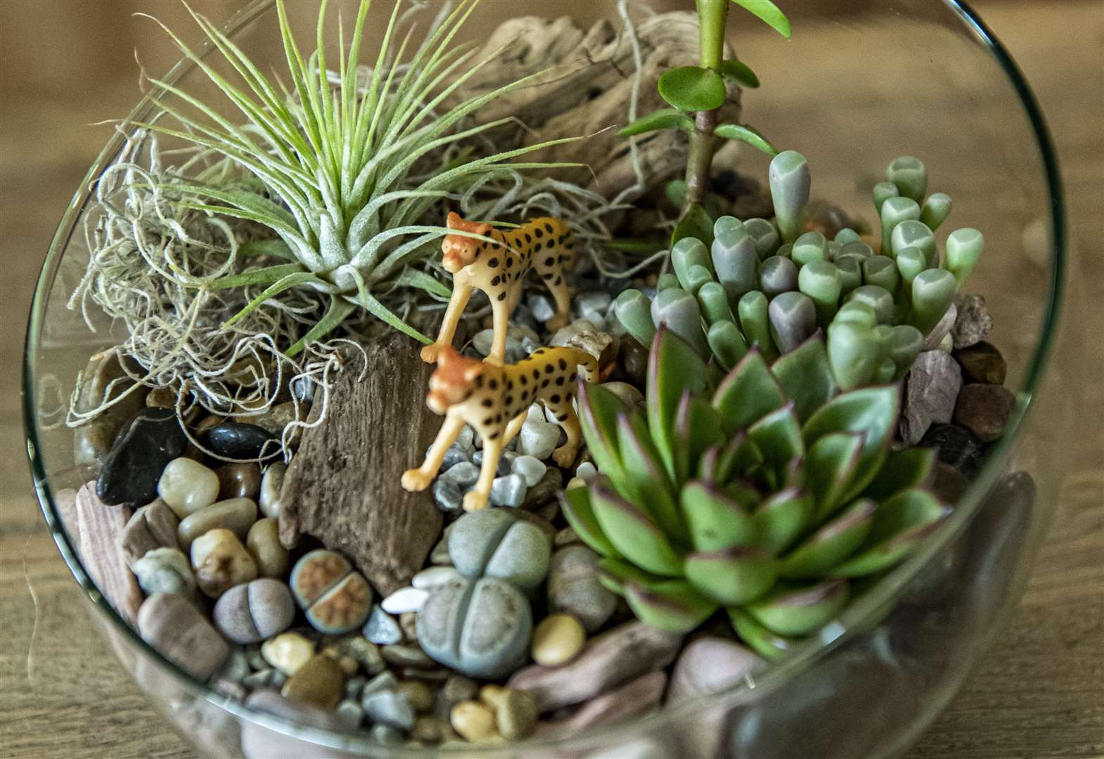 How To: Welcome to the Terrarium