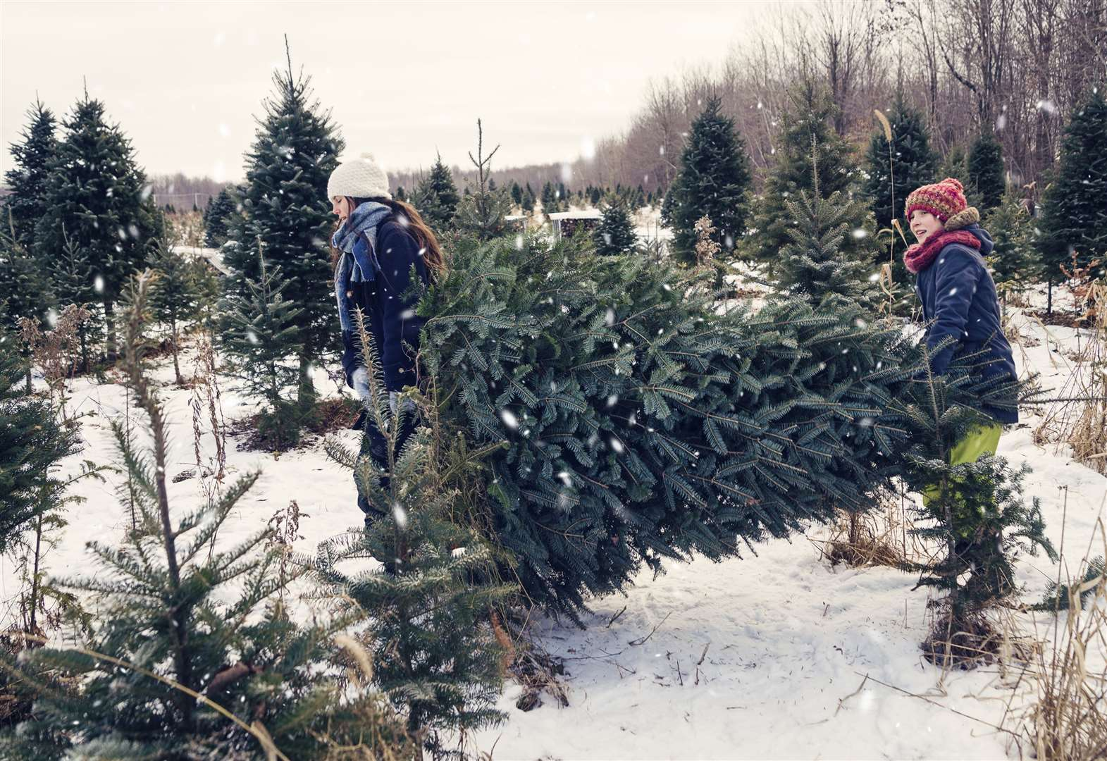 Garden Club: How a real Christmas tree can really make the festive period sing
